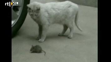 RTL Nieuws Hoe een kat een muis NIET vangt