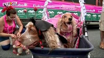 RTL Nieuws Brazilianen geven carnavalsfeestje voor honden