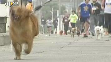 RTL Nieuws Hond-met-baasje-hardloopwedstrijd