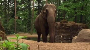 Uitgelicht - Afl. 19: Burgersâ' Zoo