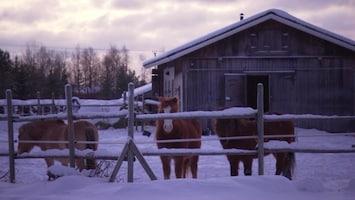 Pluijms Eetbare Wereld Lapland deel 1