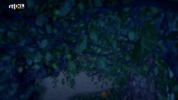 Sprookjesboom - Slaapkapje