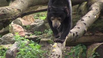 Burgers' Zoo Natuurlijk Afl. 7