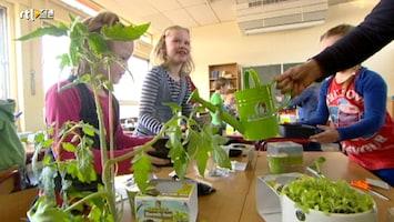 Green-kids Schoolitem: kweekbakjes binnen