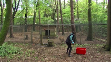 Burgers' Zoo Natuurlijk - Afl. 11
