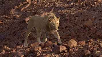 Vanishing Kings - Lions Of The Namib - Afl. 1
