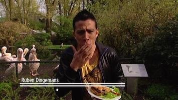 Burgers' Zoo En Waarom - Zeb En De Tijgers