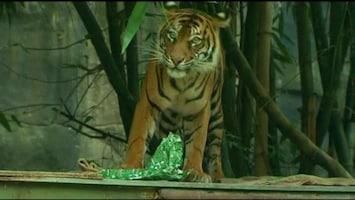 RTL Nieuws Kerst in de dierentuin