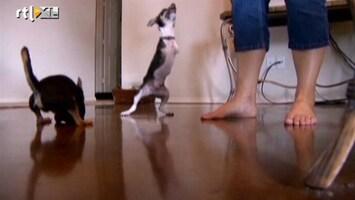 RTL Nieuws Hondjes volkomen gelukkig zonder voorpoten