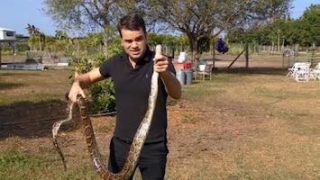 RTL Nieuws Erik Mouthaan op slangenjacht in Florida