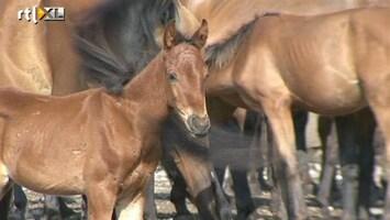 RTL Nieuws Onderzoek naar paardenvleesschandaal in Nederland