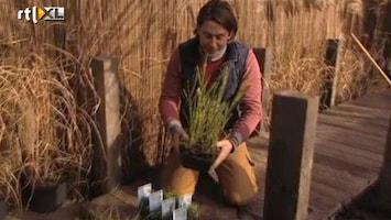 Eigen Huis & Tuin Hoe maak je een moeras in je tuin?