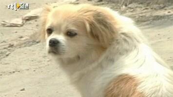 RTL Nieuws Chinese hond op het verkeerde been