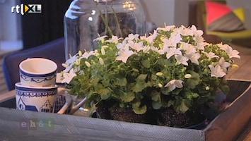Eigen Huis & Tuin De campanula is de woonplant van de maand