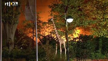 RTL Nieuws Felle uitslaande brand in dierenpark Emmen