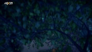 Sprookjesboom - Zoete Koekjes