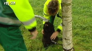 RTL Nieuws Red een dier via 1-4-4