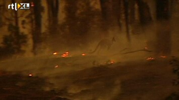 RTL Nieuws Zorg om nieuwe bosbrand Australië