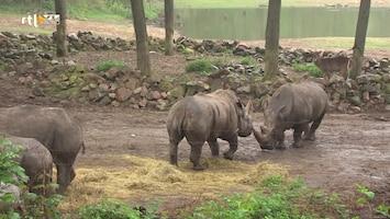 Burgers' Zoo Natuurlijk - Afl. 1