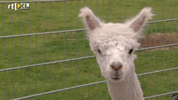 Editie NL Alpaca: roofdier nummer 1