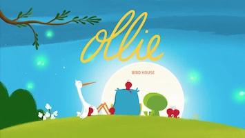 Ollie - Vogelhuisje