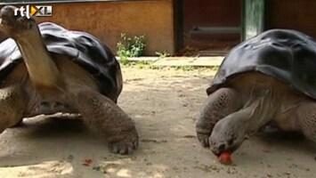 RTL Nieuws Oeroude schildpaddenliefde voorbij