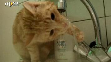 RTL Nieuws Kattenfilmpjes een rage op internet