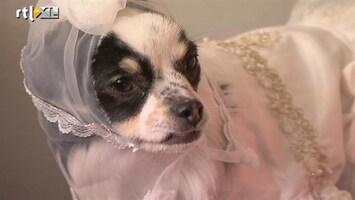 Barbie's Bruiloft - Het Trouwjurkje Van Gucci