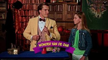 Wonderschool - Wardo's Wonderlijke Weddenschap