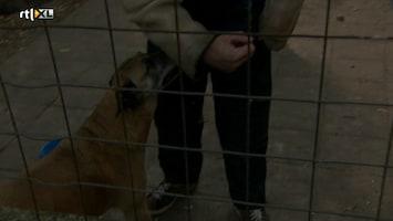 Mijn Huis Vol Dieren - Mijn Huis Vol Dieren Aflevering 6