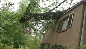 RTL Nieuws Brabant, de dag na de storm