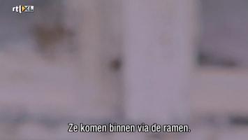 Helden Van 7: Billy The Exterminator - Helden Van 7: Billy The Exterminator /11