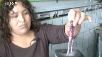 RTL Nieuws Cocktail met kikker populair in Peru
