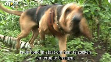 RTL Nieuws Bloedhonden moeten berggorilla's redden