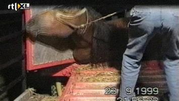 RTL Nieuws 'Dierenmishandeling zwaarder bestraffen'