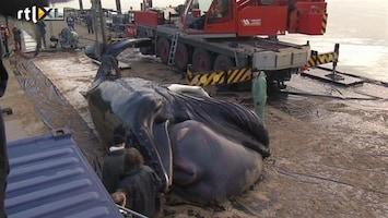 RTL Nieuws Minister wil protocol voor zeezoogdieren in nood