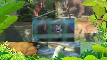 Jungle Club - Afl. 8
