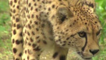 Uitgelicht - Afl. 17: Burgersâ' Zoo