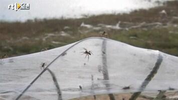 RTL Nieuws Spinnen vluchten voor overstromingen