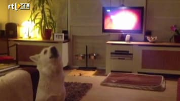 Editie NL Hond King doet Editie NL-tune na