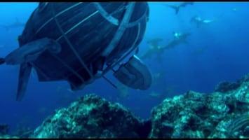 Piet Piraat Wonderwaterwereld - De Zeeleguaan