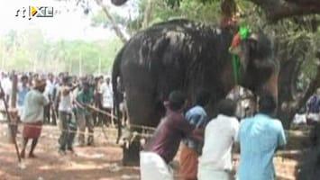 RTL Nieuws Olifant op hol geslagen in India