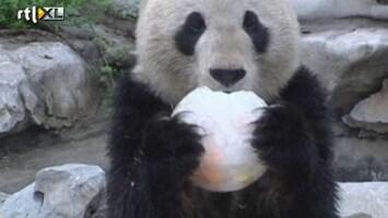 RTL Nieuws Panda viert zijn tiende verjaardag