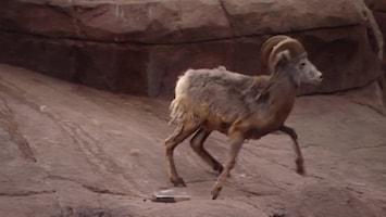 Burgers' Zoo En Waarom - Sem En De Slinger- En Klimaap