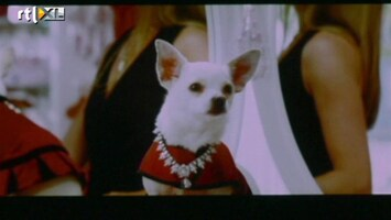 Films & Sterren Ambilight Opening Night Beverly Hills Chihuahua