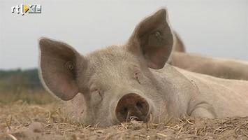RTL Nieuws Boer zet foto van elk geslacht varken op internet