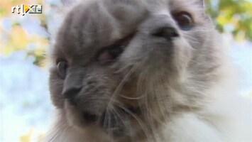 RTL Nieuws Kat met twee gezichten