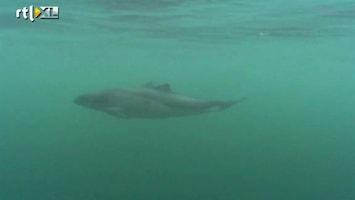 RTL Nieuws Tientallen dode bruinvissen