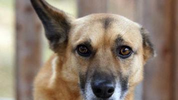 RTL Nieuws Honden vieren feest op vuurwerkvrij vakantiepark