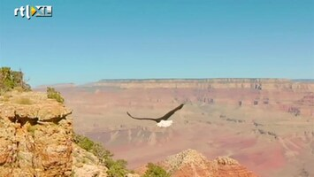 Editie Nl - Natuurfilm In Vogelvlucht